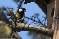 Birdgardening attivo e passivo