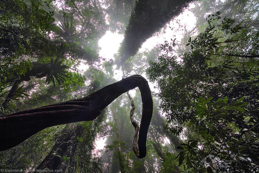 Foto 13 - La foresta pluviale del Dorrigo National Park (NSW, Australia) - (Dati di scatto: Canon EOS 7D, Sigma 8-16 f/4.5/5.6 DC HSM, 1/32 sec, f/4.5, ISO 100, mano libera)