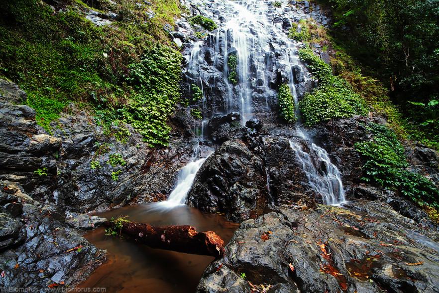 Foto 14 - Tristania falls (Dorrigo National Park, NSW, Australia) - (Dati di scatto: Canon EOS 7D, Sigma 8-16 f/4.5/5.6 DC HSM, 2 sec, f/22, ISO 100, treppiede)