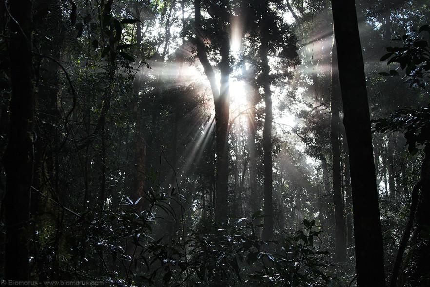 Foto 17 - La luce del sole che filtra attraverso gli alberi della foresta pluviale (Dorrigo National Park, NSW, Australia) - (Dati di scatto: Canon EOS 450D, Canon 24-105 f/4 L IS USM, 1/800 sec, f/4.0, ISO 800, mano libera)