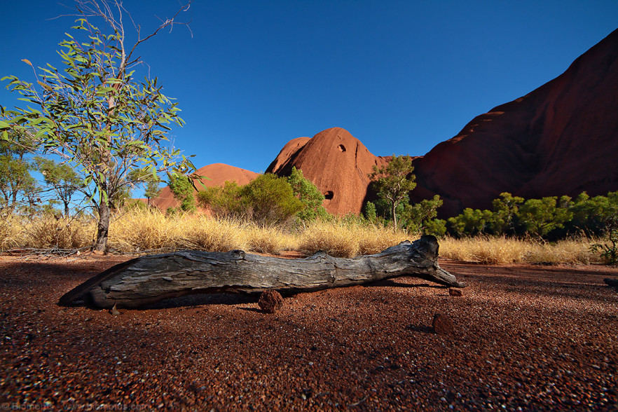 Foto 45 - Tronco a terra ad Uluru (NT, Australia) - (Dati di scatto: Canon EOS 7D, Sigma 8-16 f/4.5/5.6 DC HSM, 1/2000 sec, f/5.6, ISO 400, mano libera a terra)