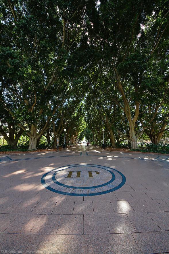 Foto 47 - Il viale centrale di Hyde parkl (Sydney, NSW, Australia) – (Dati di scatto: Canon EOS 7D, Sigma 8-16 f/4.5/5.6 DC HSM, 1/64 sec, f/8, ISO 400, mano libera)