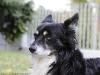 DPP_SAMPLES_0002 - Schumy dog